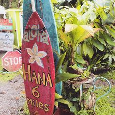 What an adventure the road to Hana is! ⛰📍⚠️ We have got all the best places to stop at and how to plan your trip coming to the Vlog channel! Don't forget to watch our one that's out now to catch up! 🌸Link in bio