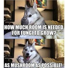 Find very good Jokes, Memes and Quotes on our site. Keep calm and have fun. Funny Pictures, Videos, Jokes & new flash games every day. Funny Dog Jokes, Puns Jokes, Jokes And Riddles, Corny Jokes, Dog Quotes Funny, Dad Jokes, Stupid Funny Memes, Funny Relatable Memes, Haha Funny