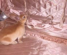 images about Pink isn't just a color. on We Heart It Teen Idle, Rauch Fotografie, Nicole Dollanganger, Pink Aesthetic, Pretty In Pink, Cute Animals, Childhood, Bunny, Creatures