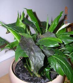 zalanie Small Garden Design, Home And Garden, Make It Yourself, Flowers, Plants, Gardening, Cactus, Balcony, Lawn And Garden
