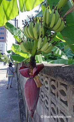 Bananenblüten Thai Dessert, Thai Snacks, Banana, Fruit, Plants, Thai Recipes, Recipes With Bananas, Asian Vegetables, Eating Raw
