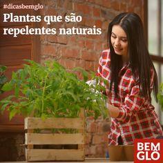 Conheça mais opções de plantas repelentes e saiba o que cada uma faz especificamente. Confira!