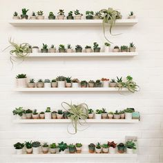 100 Beautiful DIY Pots And Container Gardening Ideas Plant Wall, Plant Decor, Decoration Plante, Plants Are Friends, Plant Shelves, Cactus Y Suculentas, Cacti And Succulents, Cactus Planters, Cool Ideas