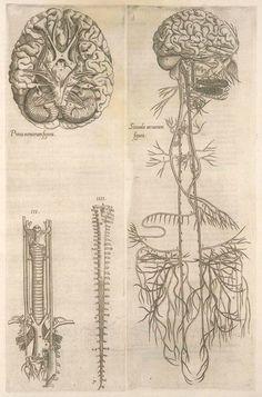 Grabado del cerebro y nervios craneales de Thomas Geminus (1545)