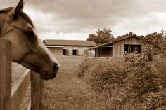 The Barn at Sanderlin Horse Farm's