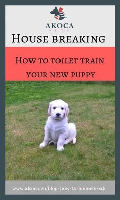 Toilet training a puppy - Akoca Pets