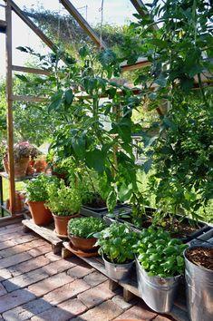 Herb Garden Design, Garden Oasis, Vegetable Garden Design, Garden Cottage, Indoor Garden, Outdoor Gardens, Greenhouse Gardening, Greenhouse Growing, Garden Organization
