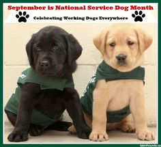 September is National Service Dog Month. Celebrate These Special Canines by spreading awareness and fundraising. Watch and share our videos that raise money for National Service Dogs and LF dog guides.