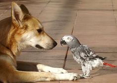 dog and parrot !..what are they talking about ?