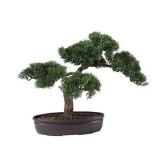 "Nearly Natural "" Cedar Bonsai Silk Plant, Grn (€35) ❤ liked on Polyvore featuring home, home decor, floral decor, plants, fillers, flowers, green, grn, artificial trees and fake plants"