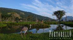 Olha que lindo nosso #Safari, O que você está esperando para conhecer ? #VemProPortobello #Resort