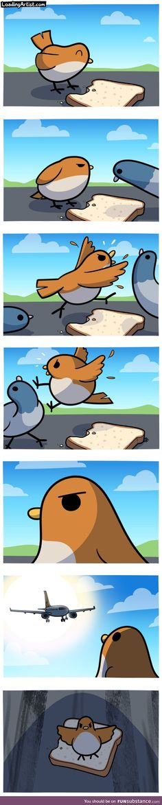 Tagged with funny, comic, birds, not today; Not today mother fucker. Really Funny Memes, Stupid Funny Memes, Funny Posts, Cute Comics, Funny Comics, Animal Memes, Funny Animals, Image Hilarante, Funny Cute