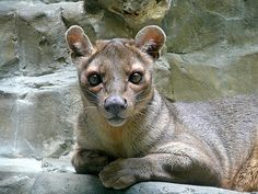 """Fossa, """"Jack"""" at PC&A Building"""