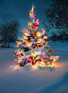 christmas lights in the snow. I love winter+Christmas time! Christmas Time Is Here, Noel Christmas, Merry Little Christmas, Outdoor Christmas, Winter Christmas, Vintage Christmas, Magical Christmas, Christmas Ideas, Merry Christmas Quotes