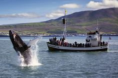 Eine Walbeobachtung in Húsavík