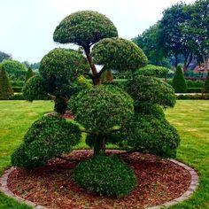 luxury trees ahorn azalee big bonsai gardenbonsai jap gartenbonsai bonsai pinterest. Black Bedroom Furniture Sets. Home Design Ideas