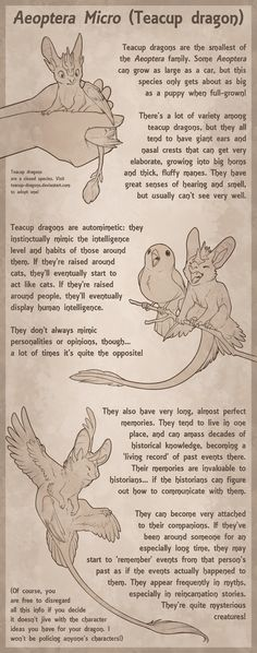 Teacup Dragon Species Sheet by Aeoptera.deviantart.com on @DeviantArt