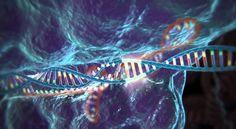 Actualización a la tecnología CRISPR/Cas9 nos acerca al tratamiento definitivo para enfermedades genéticas