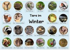 Green Jobs, Homeschooling, Winter, Kindergarten, Apps, Animals, Crowns, Environment, Science Experiments Kids
