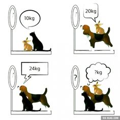 Find The Expected Weight // tags: funny pictures - funny photos - funny images - funny pics - funny quotes - Funny Images, Funny Photos, Logic Math, Math Memes, Algebra Problems, Algebra 1, Math Challenge, Lets Play A Game, Maila