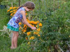 North Attleboro community garden yielding bounty