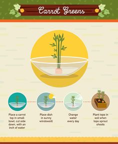 Growing Vegetables You can grow your own carrot greens - Reduce food waste by using food scraps to regrow vegetables. This detailed infographic includes 19 vegetables. Growing Carrots, Growing Veggies, Growing Plants, Hydroponic Gardening, Organic Gardening, Gardening Tips, Beginners Gardening, Flower Gardening, Indoor Gardening