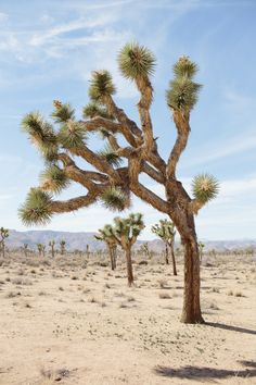 Joshua Tree National Park. We've been here. It's so cool.
