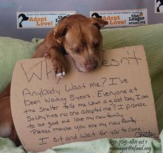 The manager of the shelter uploaded this photo of him to their Facebook page, where it quickly went viral.