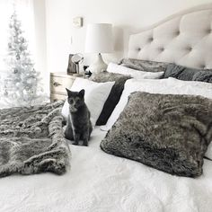 A bed fit for kings and (tiny feline) queens alike! Justyna's furry friend seems to love her tufted Bassett headboard as much as we do. In fact, we think it's purrfect. Furniture Showroom, New Furniture, Bedroom Retreat, Love Pet, Headboards, Beautiful Space, Bedroom Designs, Claws, This Is Us