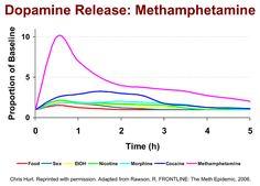 Image result for comparative dopamine levels of methamphetamine