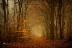 "Wood B - forest in fall, the Netherlands <a href=""http://larsvandegoor.com/"">WEBSITE</a> <a href=""https://instagram.com/larsvandegoor/"">Follow me on Instagram</a>"