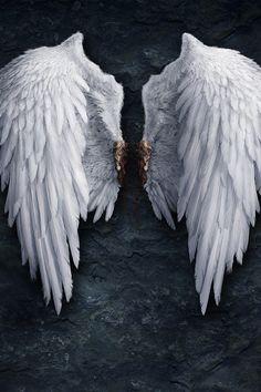 Torn off Angel wings