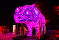 Rhino at Taronga Zoo in Sydney during the Vivid Sydney Festival
