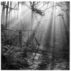 Beautiful. Forest of Dean, by Fay Godwin.
