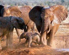 Elephant with baby in Tarangire National Park, Tanzania