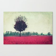 springtime Stretched Canvas by Claudia Drossert - $85.00 http://society6.com/product/springtime-9LZ_Stretched-Canvas?tag=photography