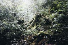yakusugiland_yakushima_japan_thevoyageur0111