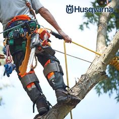 Arborist carrying a Husqvarna top handle saw Tree Surgeons, Tree Felling, Photoshoot Concept, Lawn Service, Tree Sketches, Tree Pruning, Tree Care, Getting Things Done, Climbing
