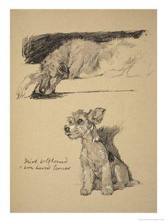 wolfhound irish