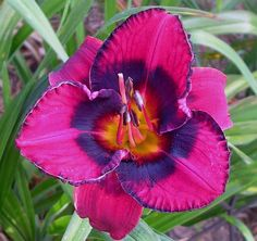 Wolverine Eyes daylily by ~ Michaela Sagatova ~, via Flickr