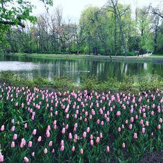 БЛОГИНГ | ПРОДВИЖЕНИЕ БЛОГА в Instagram: «Какие все-таки удивительные места в варшавском королевском парке! В который раз мне сложно пройти мимо тюльпанов. Здесь одновременно…»