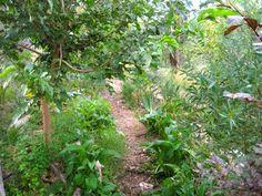 The emerging forest garden at Milkwood Farm