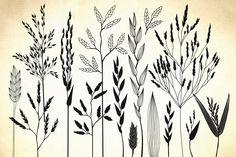 Wild herbs, bentgrass, wheat by GrafikBoutique on Creative Market
