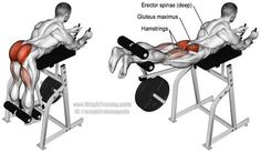Machine reverse hyperextension, usually just known as the reverse hyper. Main muscles worked: Gluteus Maximus, Hamstrings, and Erector Spinae (spinal erectors). Often used to treat lower back pain sufferers. Machine was invented by Louie Simmons of Westside Barbell.