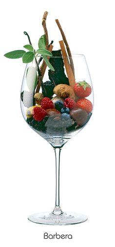 Barbera - Red Wine © Faber&Partner