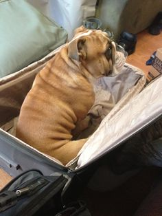 Going with Daddy ❤  Bully watches as daddy packs for deployment.