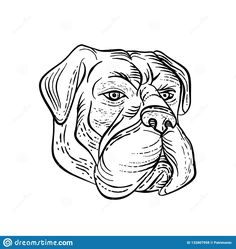 Etching style illustration of a bullmastiff, a large-sized domestic dog breed, with solid build and short muzzle like the molosser dog done on scraperboard scratchboard style in black and white Mongrel, Scratchboard, Line Illustration, Bullmastiff, Vikings, Dog Breeds, Black And White, Dogs, Artwork