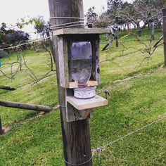 """1 Likes, 1 Comments - Roger Parkinson (@rogerparkinson) on Instagram: """"Bird feeder. Sugar water for the nectar - eating tui. I hope it doesn't rot their teeth :)"""""""