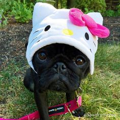 Baby pug uploaded by Andy García on We Heart It Pug Shirt, Baby Pugs, Kinds Of Dogs, Pug Love, French Bulldogs, Make Me Smile, Dog Breeds, Drugs, Beast