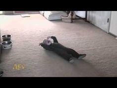 Baby Boy Tantrum | AFV - YouTube...bbbwwaaa!! little faker LOL
